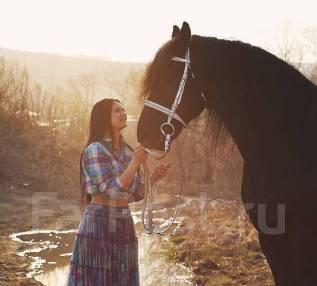 Фотосессия с красивыми лошадьми