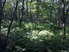 Срочно Земельный участок в районе Шаморы (собственность). ТОРГ. 2 500 кв.м., собственность, от агентства недвижимости (посредник). Фото участка