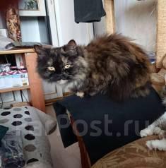 фундаменты под кошка ищет кота владивосток уйду