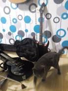 Основы игры на гитаре 50-100р час