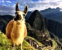 Перу. Лима. Экскурсионный тур. Перу: Мачу Пикчу, озеро Титикака, геоглифы Наска, джунгли Амазонки