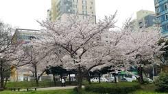 Работа для девушек в Южной Корее