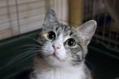 Милая кошечка Тесси мечтает стать доашней
