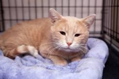 Ласковый котик Прохор мечтает о доме
