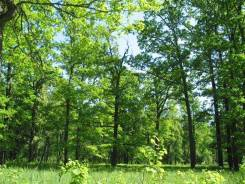 купить отличный лесной участок