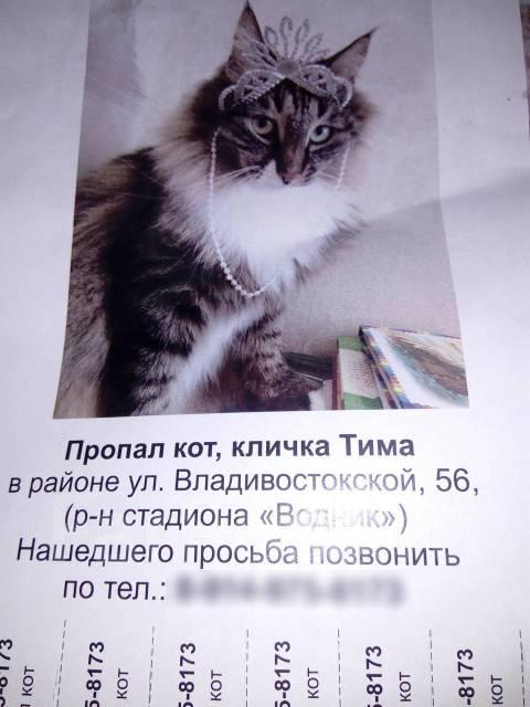 Дать объявление о находки животного работа в белгороде объявления самые новые