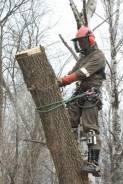 Спилим деревья на кладбище в Казани