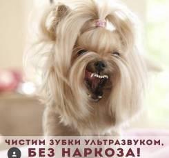 I love pets . ЗооСалон, хендлер зал, ультразвук. Чистка зубов! От 800