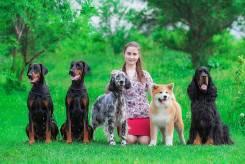 Хендлер Беседина Марина (Подготовка и показ собак на выставках)