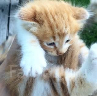 Котёнок бесплатно в хорошие руки