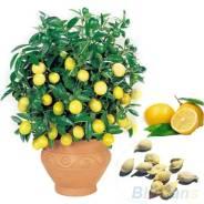 Лимон. Под заказ