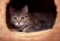 Кошка Малена