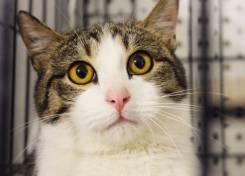 Лучезарный кот Дональд ищет свою семью