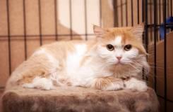 Солнечная кошка Федра в поисках уютного дома