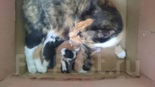 Кошка с котятами,