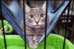 Трогательный котик Эрик в поисках дома