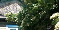 № 269. Вам понравится этот земельный участок в п. Приамурский. 600 кв.м., собственность, электричество, вода, от агентства недвижимости (посредник)