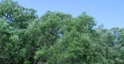 № 277. Подарите себе радость наслаждения природой с. им. Тельмана. 600 кв.м., собственность, от агентства недвижимости (посредник)