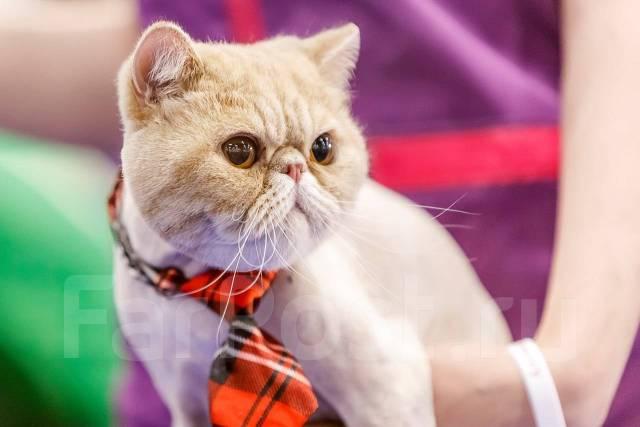 Стрижка собак и кошек от победителя конкурсов!