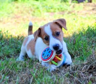 бассен фарпост владивосток животные собаки свет менее заметен