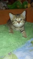 работ внутри купить британского котенка в спасске дальнем Образовательная организация