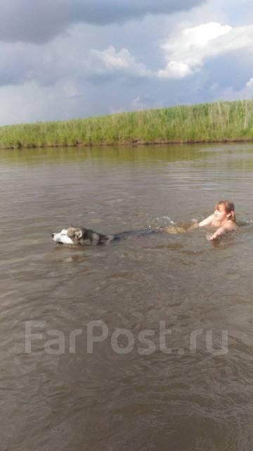 Передержка собак в Уссурийске