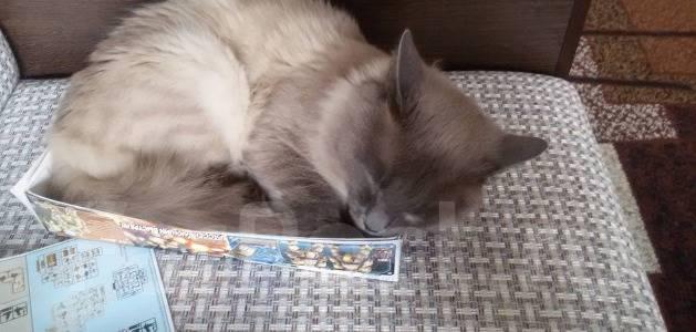 Вязки котов в хабаровске