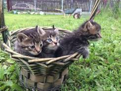 Беспородные кошки.