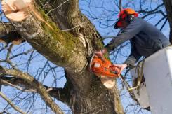 Пилим деревья от 500р во Владивостоке