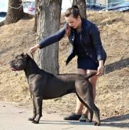 Хендлинг собак, обучение владельцев, Услуги хендлера