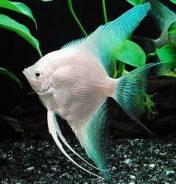 Рыбы.