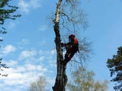 Спил деревьев, корчевание пней
