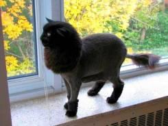 Грумер стрижка кошек котов БЕЗ Наркоза с выездом на дом