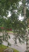 2-комнатная, улица Комсомольская 14. Центр, агентство, 40 кв.м. Вид из окна днём