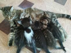 Самые замечательные котята ищут хозяев
