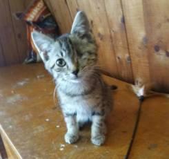 Котёнок-кот добрым людям в Дар.