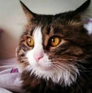 Отдам добрым хозяевам ласковую кошку