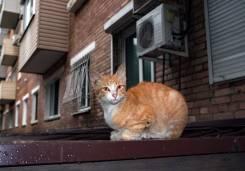 Котёнок бездомный