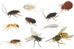 Средства от насекомых и грызунов.