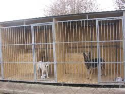 Передержка собак (Зоогостиница)