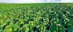 Земля бесплатно для сельхозпроизводства в Хабаровске