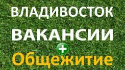 Помощник торгового представителя. ИП Кучеров. Владивосток