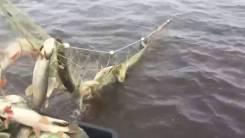 Рыбообработчик. Улица Краснореченская 4