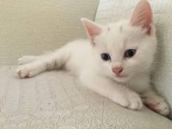 Котята ищат добрых и ласковых родителей