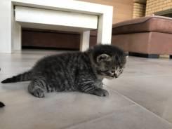Котенок в Находке