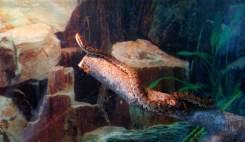 Змея щитомордник