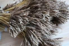 Колоски пшеницы натуральные. Малый пучок (около 15-17шт)
