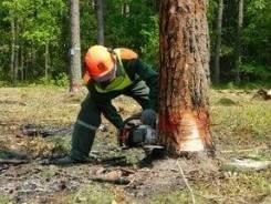 Работа вальщиком леса вахта север