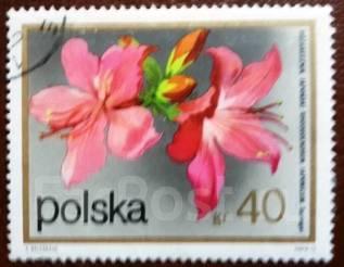 Марка. Цветок. Полша. 1972 г.