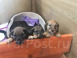 профили фарпост владивосток животные собаки продаже частников